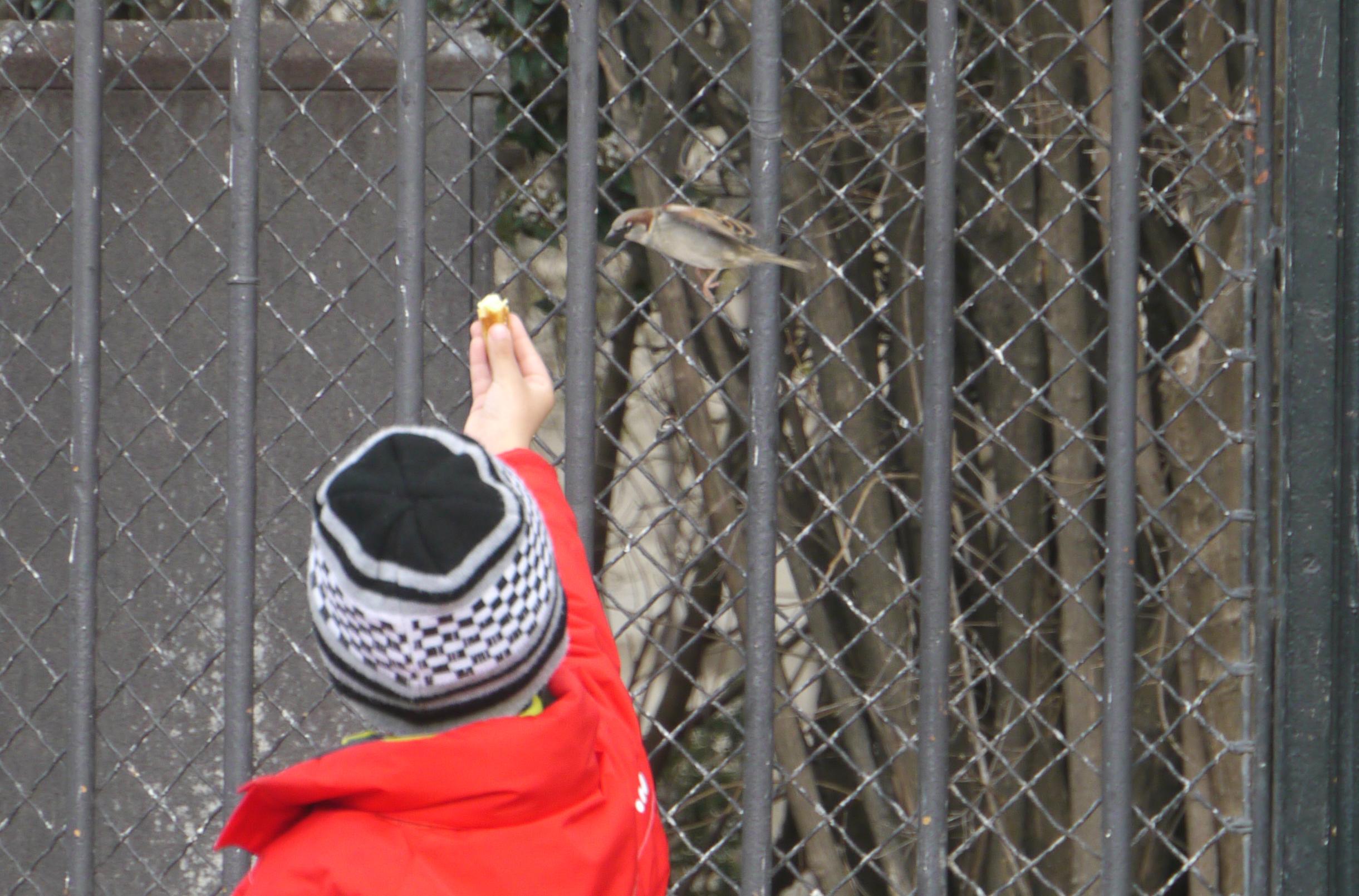 Paris 22 barn matar fågel Notre dam